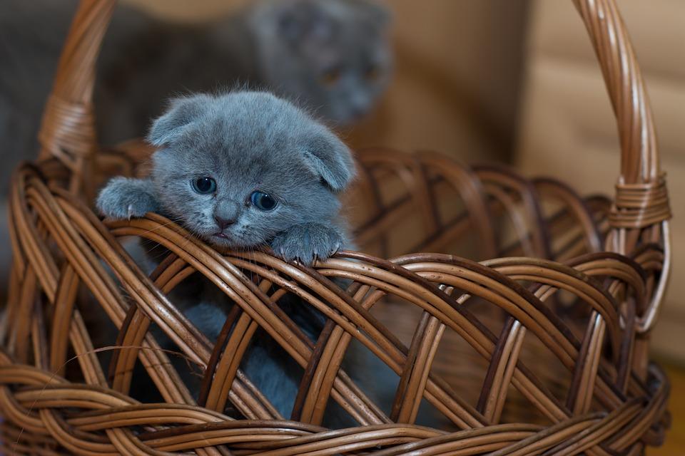 Добрый рассказ про коробку с котятами