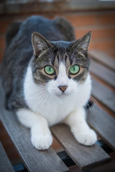Про необычную кошачью благодарность