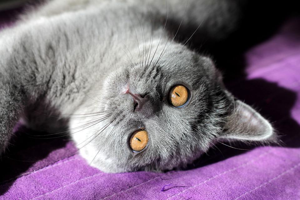 Самый ответственный кот на планете