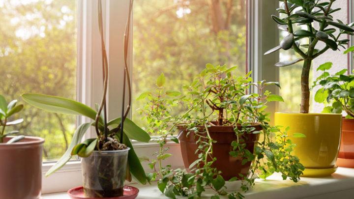 Растут как на дрожжах! 6 способов ускорить рост комнатных растений