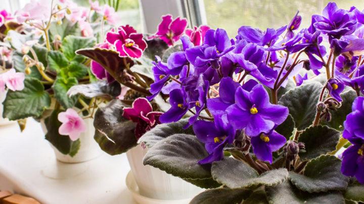 Несложные способы ухода за домашними растениями