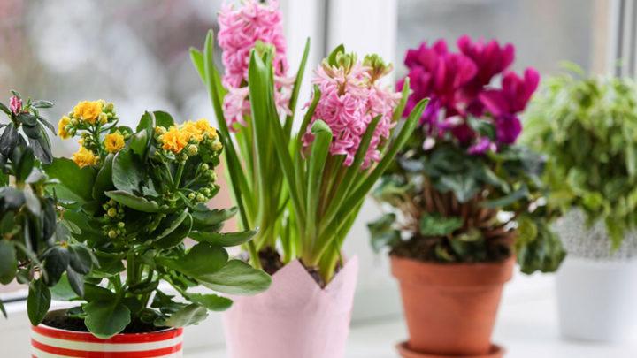 Как ухаживать за комнатными растениями? ТОП-5 советов